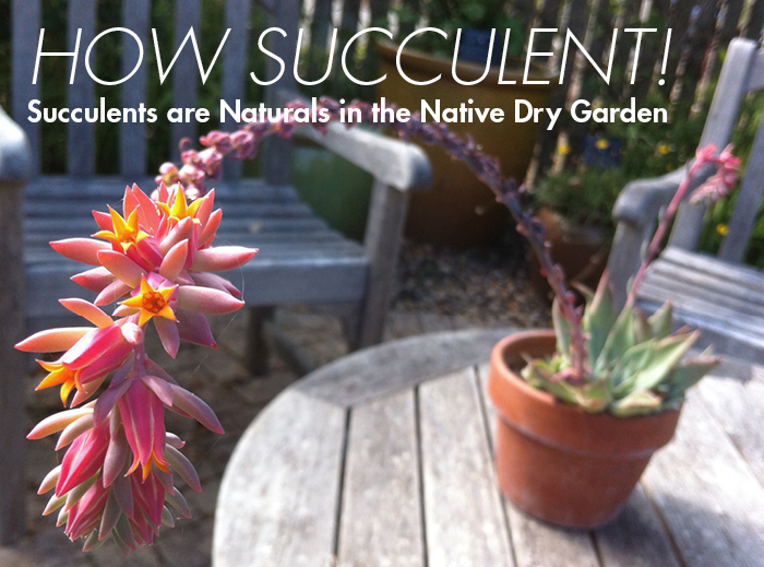 LBJ Wildflower Center offers native plant suggestions