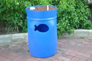 barrel-aquaponic-system