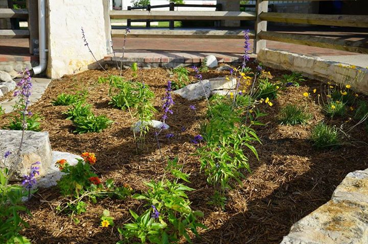 See the monarch waystation at the Bell County Rest Stop on I-35