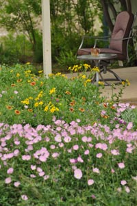 Save nature and free time — install a Pocket Prairie