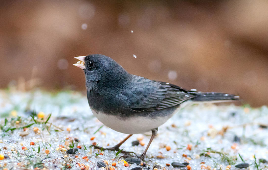 National Audubon Society's tips for helping birds this winter